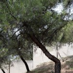 EXTENSION DU CIMETIERE ST PANCRACE // MARC BARANI // ROQUEBRUNE CAP MARTIN